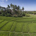 Villa East Indies Canggu (5)