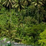 hartland estate_gallery_37_river_view_rafting