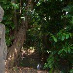 Villa Bunga Pangi Canggu Bali (12)
